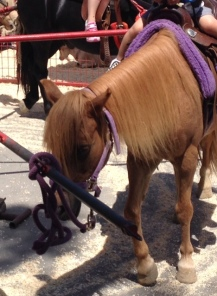 Pony at Ocean Park Farmers Market